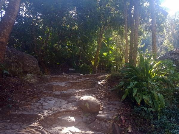 Natur im Nationalpark Doi Suthep