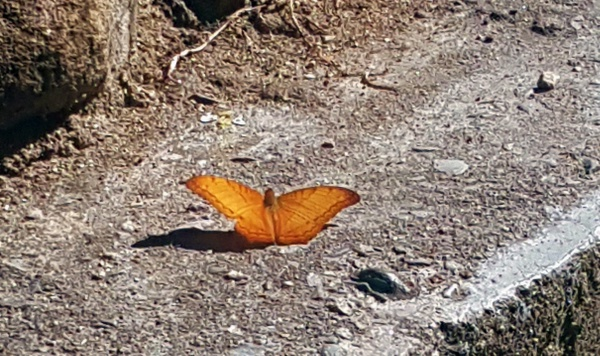 man trifft auch auf unzählig viele Schmetterlinge