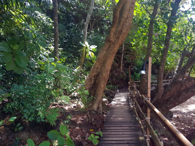 "Beginn ""Monkey Trail"""