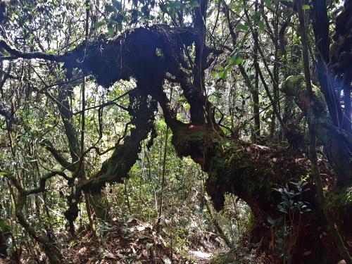 Dschungel Cameron Highlands